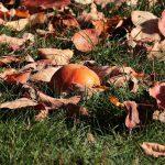 de-herfst-heeft-invloed-op-de-tuin