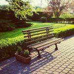 genieten-van-groen-in-uw-tuin-kan-ook-in-de-winter