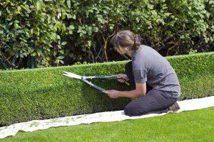 snoeien-is-noodzakelijk-voor-een-mooi-onderhoude-tuin
