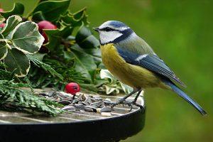 Ook in de winter is tuinonderhoud belangrijk