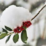 Zijn jouw planten al klaar voor de winter?