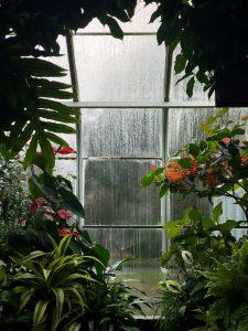 tuinonderhoud-najaar