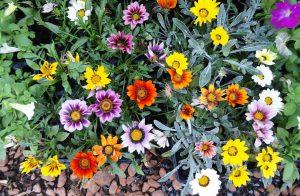 Waarom een hovenier inschakelen voor uw tuinonderhoud?