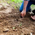 Inspiratie voor het aanleggen van een nieuwe tuin